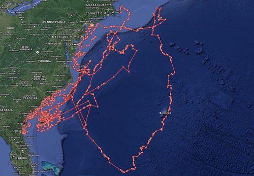 Mary-lee-shark-map