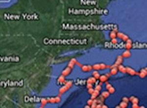 Long island shark detail