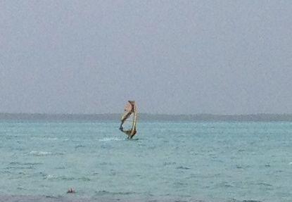 Bonaire windsurfer