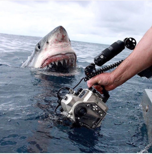 Photographing shark